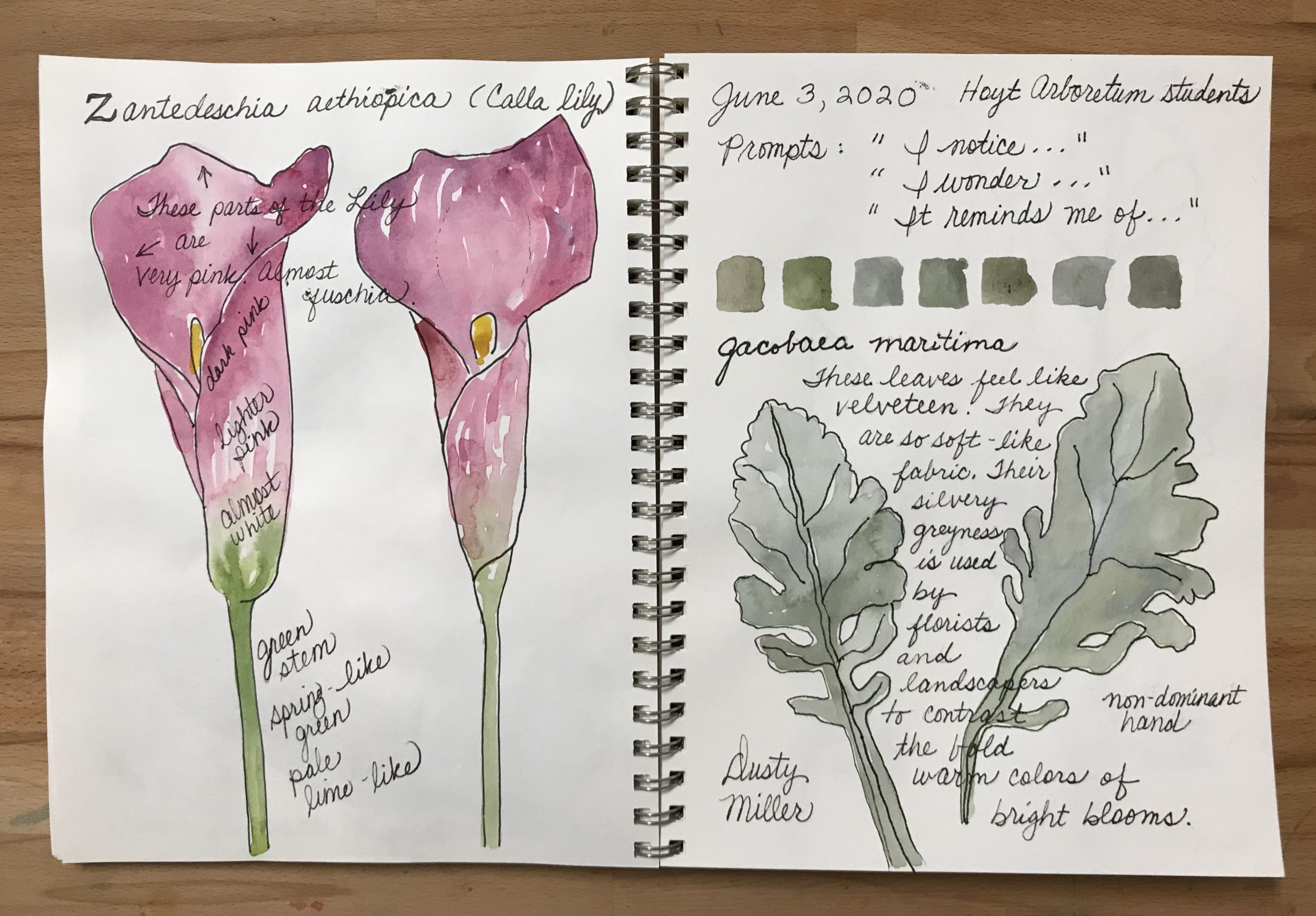 Nature Journaling with Watercolors (Zoom Class)